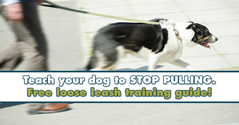 Loose Leash Pulling