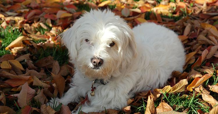 Dog Leaves Fall
