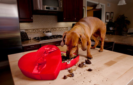 behaviour issues with dogs