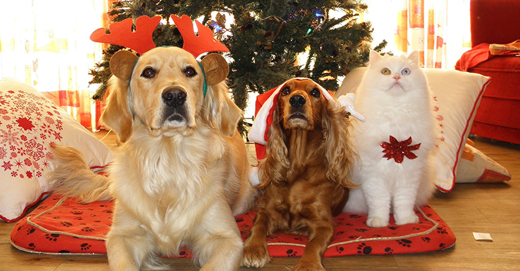 holiday safety tips for dogs