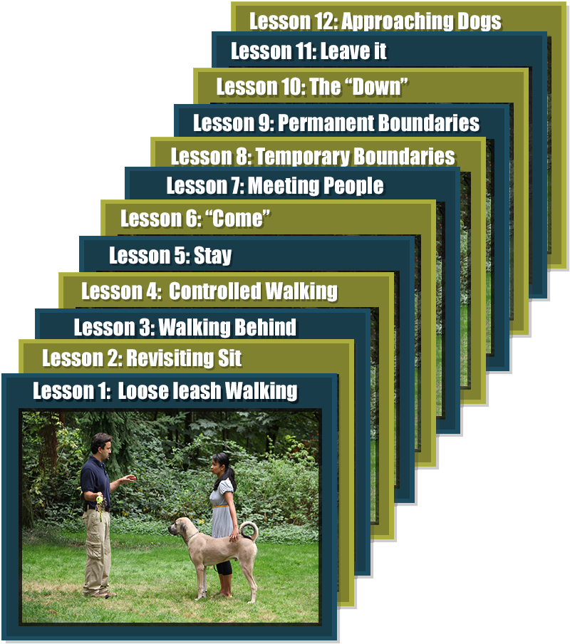 Dog Training Video Lessons