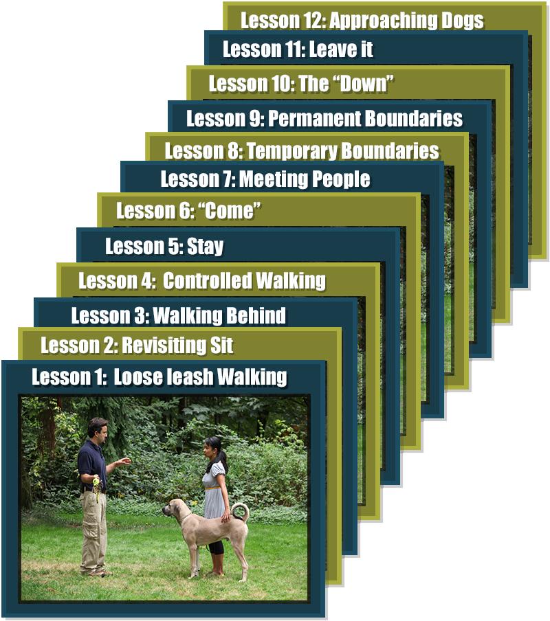 Dog Training Video Lessons